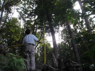 毎木調査風景.JPG